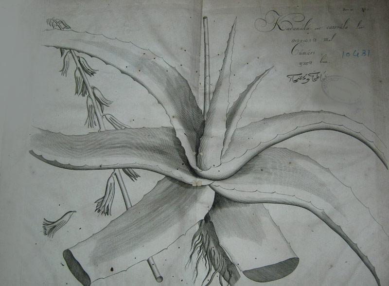 Hortus Malabaricus Malayalam Pdf Download --
